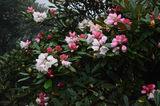 怒放的花朵